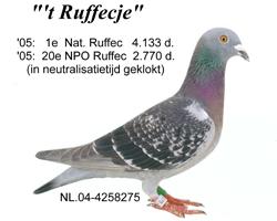 duif_04-4258275