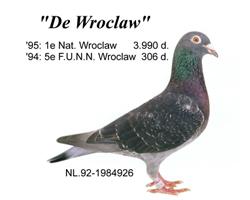 duif_92-1984926