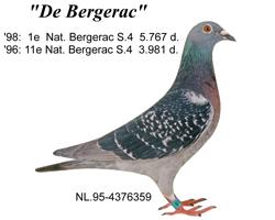 duif_95-4376359