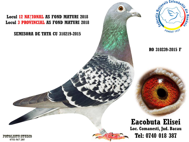 310239-2015 F Eacobuta Elisei
