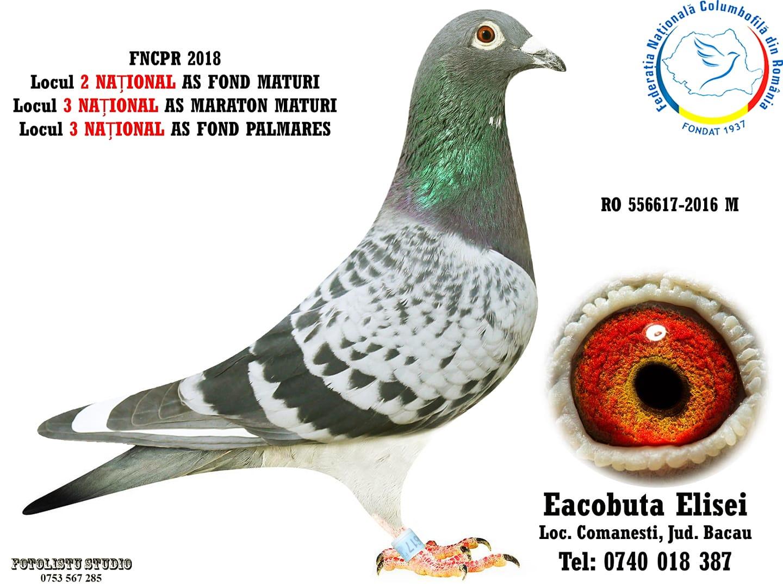556617-2016 M Eacobuta Elisei